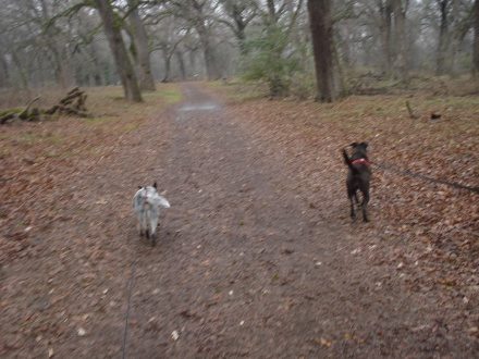 It's nice to enjoy a quiet Winter morning in Bidwell Park.