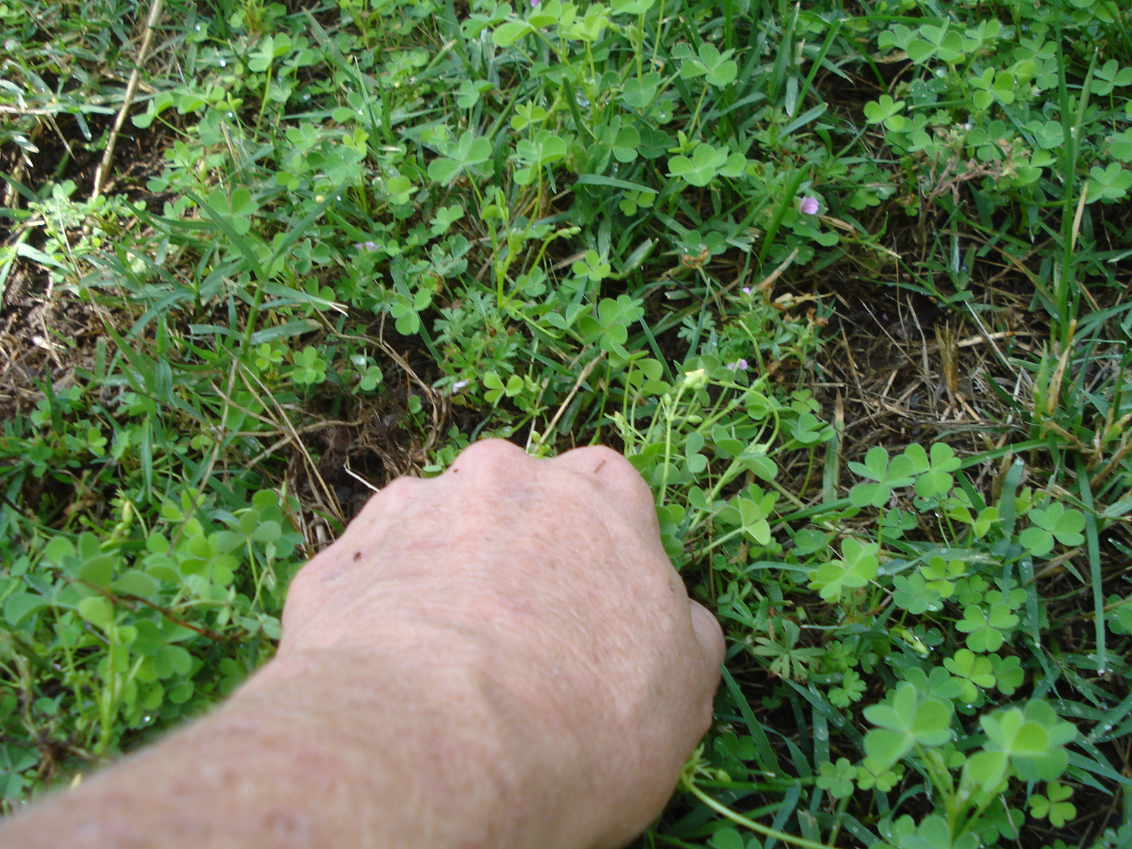How to Remove Sandbur From Your Lawn
