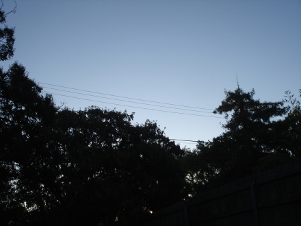 5:50 am, me and Hummer await the sun. There he is, about the center of the picture, sitting on the phone line.