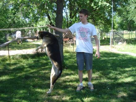Thanks Boy! Dog loved Boy, Boy loved Dog.