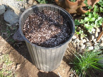 I set this pot up today, I'll fill it with plants tomorrow. By June I hope to have half dozen or more set up and putting out berries.