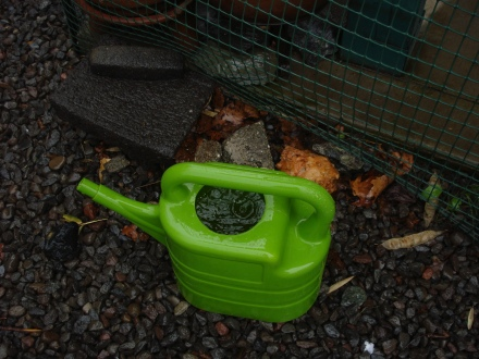 This watering can filled up quickly under a downspout today.