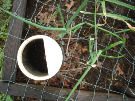 This is the Black Hole - best gopher trap ever.