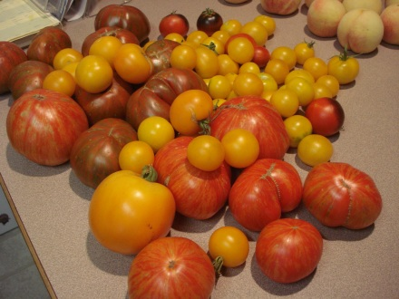 Are you getting sick of tomatoes? I'm not getting sick of tomatoes.
