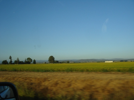 Ah, the green, green grass of home.
