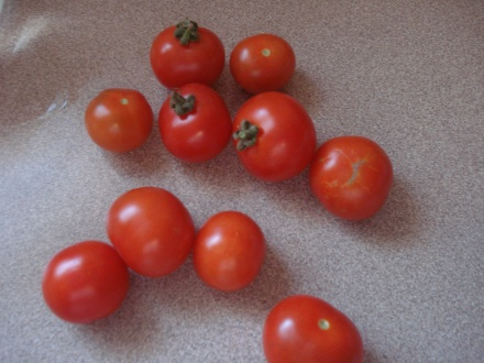 Surprise! I found these sweet cherry tomatoes and more coming on the vine in a part of the garden we turned off weeks ago.