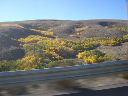 These pretty trees indicate where there is groundwater beneath the sand and sagebrush.
