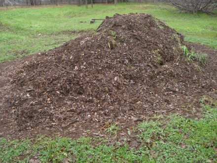This pile is made almost entirely of oak leaves, with some old stumps and weeds.