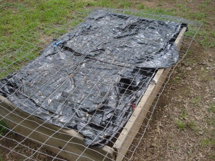 I've covered this bed with an old black garbage bag, hoping to kill the pests before I set out anything.