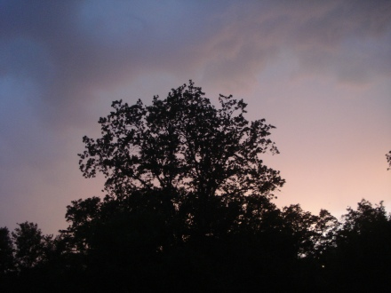 I wish I had video - the huge oaks around our yard were doing the hoochie-coochie.