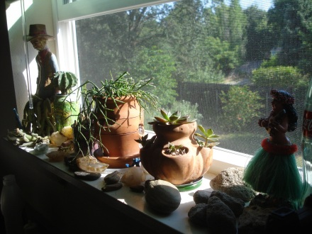 This is my mini-succulent garden, sitting in the east window of my kitchen.