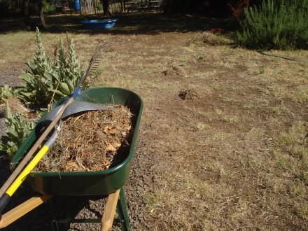 Now to sweep up the piles and take them to the compost heap.