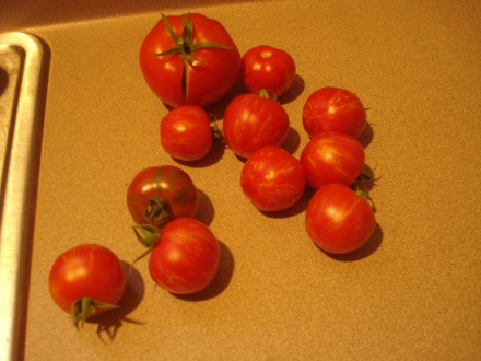 Even now I can imagine these tomatoes with a drizzle of homemade Ranch dressing.