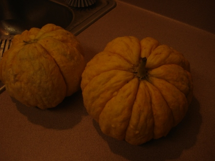 A couple of smaller Prescotts. They all started coming ripe at once.