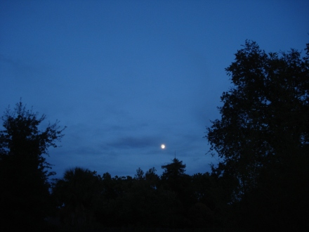 The moon has lit up the sky the last few nights.