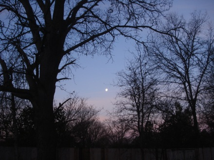 I ran outside this morning just in time to say Good Morning to the moon before she went to bed.