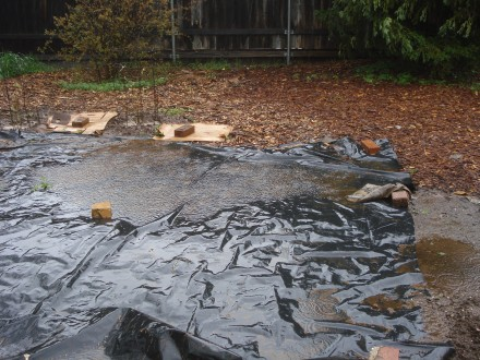 It's amazing how much water collects on these tarps I laid down to kill weeds.