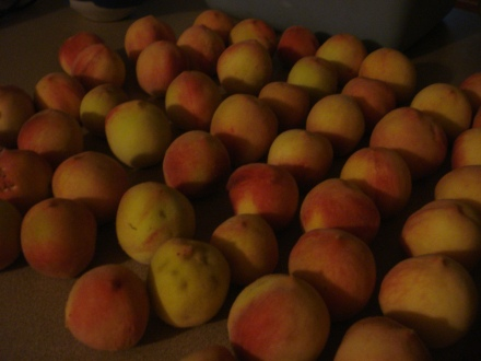 These peaches ripening on my kitchen counter give my whole apartment the odor of ambrosia.