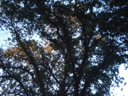 I like to watch the sun set as reflected in our oaks trees, it's like a symphony of color.