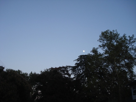 In July I got this snapshot of the moon rising over my big deodor cedar trees.